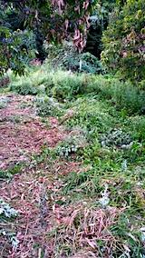 20170908栗畑の下草刈り後の様子4