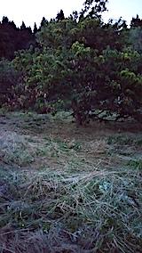 20170909栗畑の下草刈り後の様子1