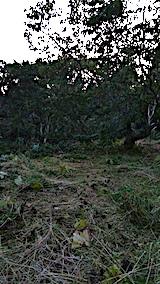 20170910栗畑の下草刈り後の様子3