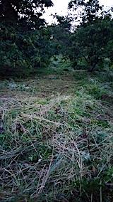 20170910栗畑の下草刈り後の様子6