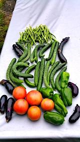 20170911今日収穫した野菜