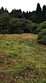 20170911栗畑の下草刈り後の様子2