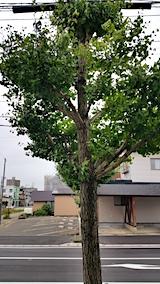 20170912外の様子昼過ぎ強風2
