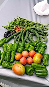 20170913収穫した野菜