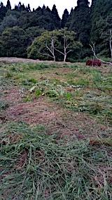 20170913栗畑の下草刈り後の様子1