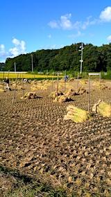 20170915秋田市で稲刈り始まる1