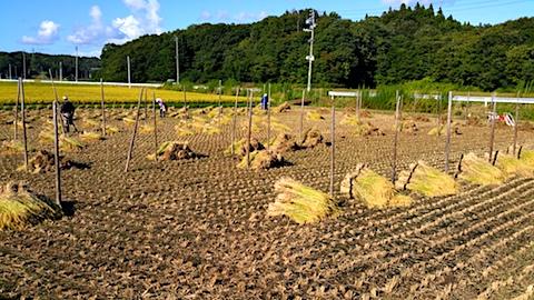 20170915秋田市で稲刈り始まる4