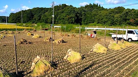 20170915秋田市で稲刈り始まる5