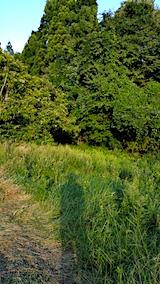 20170915栗畑の下草刈り前の様子1