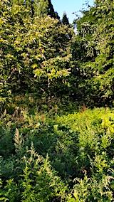 20170915栗畑の下草刈り前の様子2