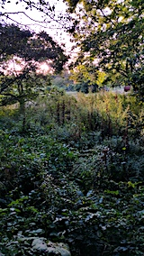 20170915栗畑の下草刈り前の様子6