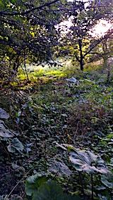 20170915栗畑の下草刈り前の様子5