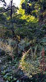 20170915栗畑の下草刈り前の様子8