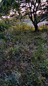 20170915栗畑の下草刈り前の様子7