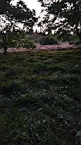 20170915栗畑の下草刈り後の様子6