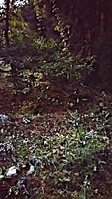 20170915栗畑の下草刈り後の様子8
