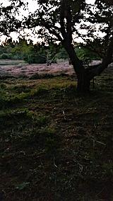 20170915栗畑の下草刈り後の様子7