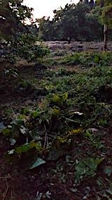 20170915栗畑の下草刈り後の様子9