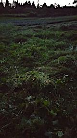 20170915栗畑の下草刈り後の様子3