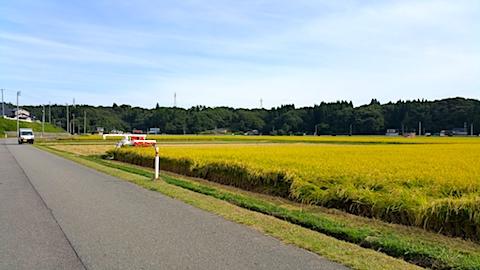 20170916山へ向かう途中の様子コンバインによる稲刈り始まる1