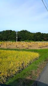 20170916山へ向かう途中の様子昨日刈り取られた稲を杭へ天日干し作業完了