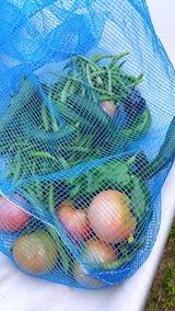 20170916今日収穫した野菜