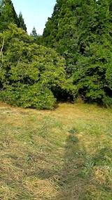 20170916昨日下草刈りを終えた栗畑の様子