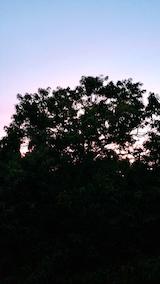 20170916外の様子夕方栗畑より