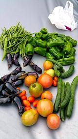 20170917今日収穫した野菜