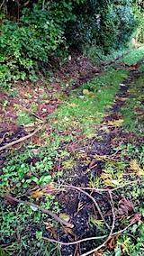 20170919台風後の山の様子杉の枝散乱