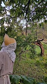 20170919台風後の山の様子スモモの木が折れる
