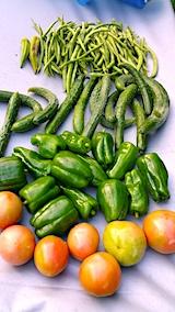 20170919野菜の収穫