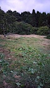 20170919栗畑の下草刈り後の様子夕方2