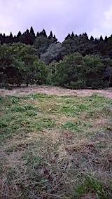 20170919栗畑の下草刈り後の様子夕方3