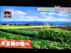 20170928永井野地区の天王柿2