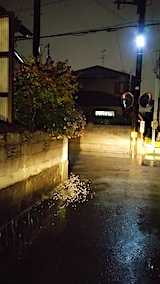 20171011外の様子雨で花が落下