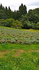 20171012ラベンダーの畑