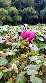 20171014カボチャの収穫1