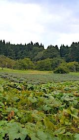 20171014ラベンダーの畑