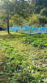 20171016草刈り後の様子4