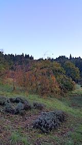 20171024山の様子八重紅枝垂れ桜のある斜面