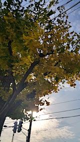 20171027外の様子昼過ぎイチョウの葉っぱ