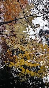 20171029岳岱途中の紅葉散策コシアブラ1