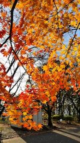 20171105一つ森公園の紅葉1