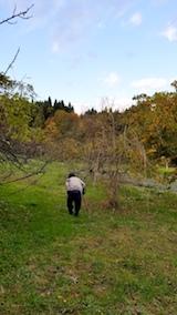 20171105八重紅枝垂れ桜のある斜面の様子