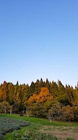 20171107ラベンダーの畑と紅葉2