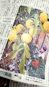 20171124秋田でもゆずの収穫