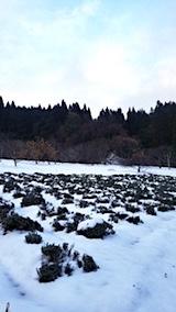 20171214ラベンダーの畑1
