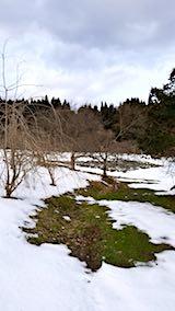 20180110山の様子八重紅枝垂れ桜のある斜面とラベンダーの畑