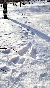 20180112山の様子ウサギの足跡2